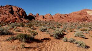 Sandstone, Nevada Desert